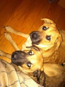CoCo and Chanel adopted from Adirondack Adopt a Stray#Myloves